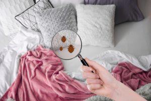 finding bedbugs