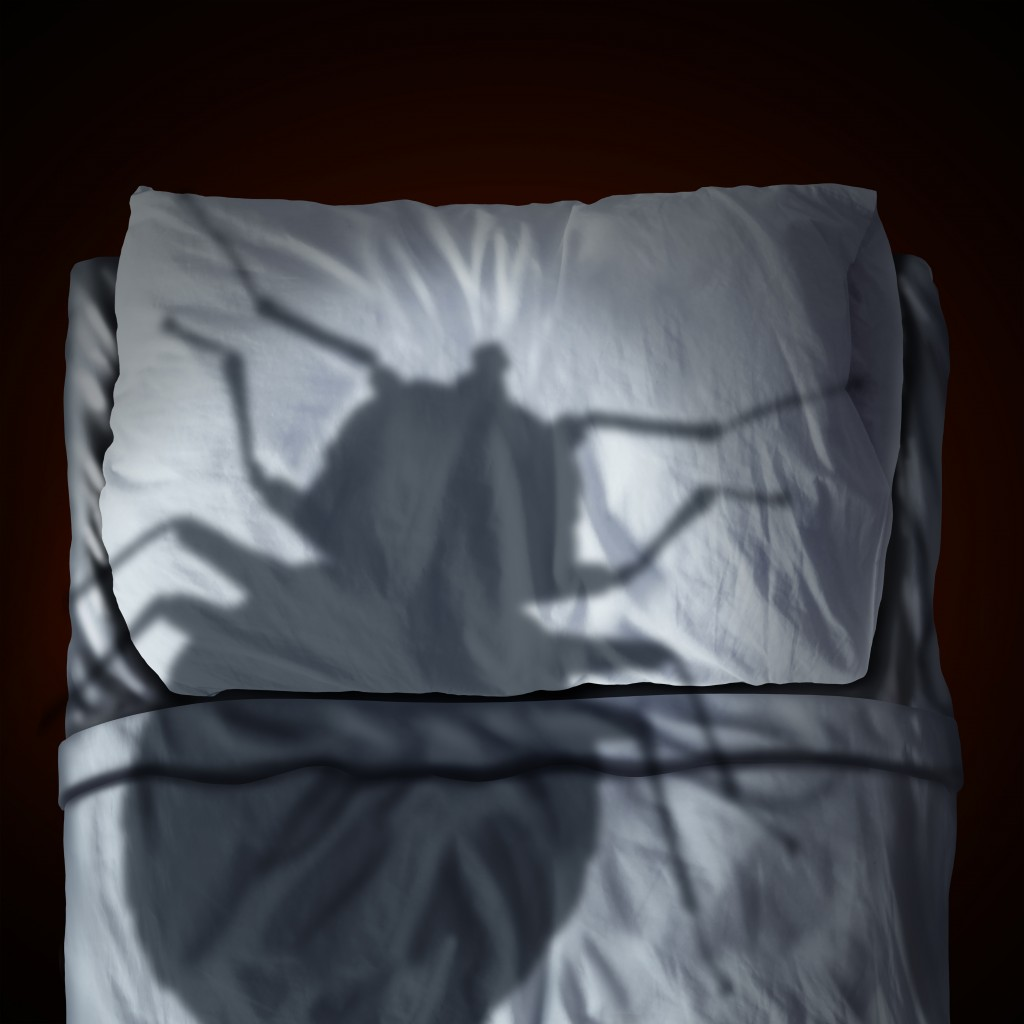 bed bugs removal concept