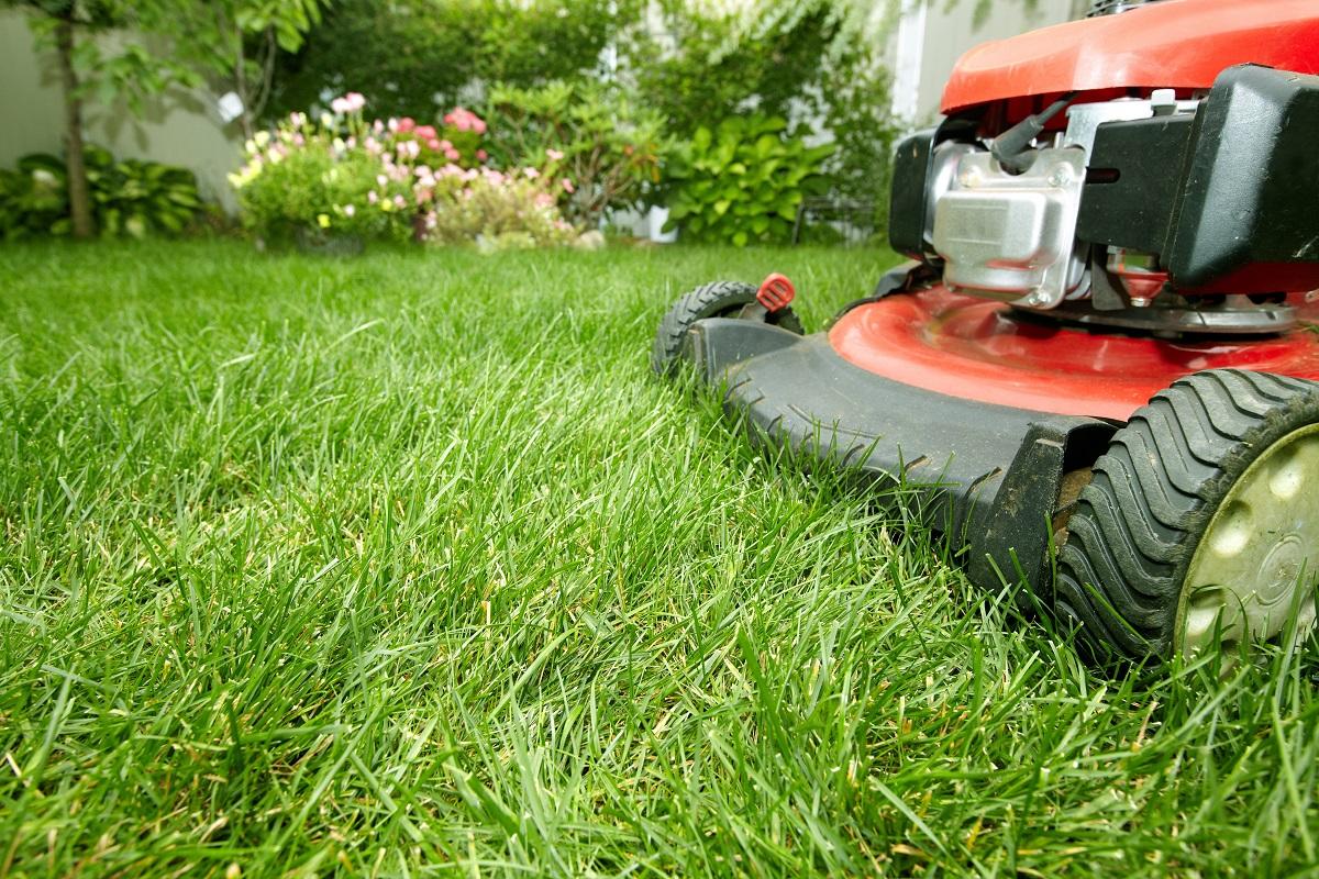 lawn mower on a garden
